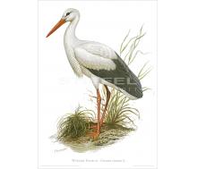 Natur Kunstdruck Weißer Storch