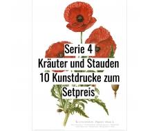 Kunstdruck I Paketpreis Serie 4 Kräuter & Stauden