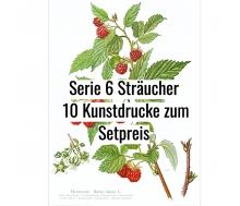 Kunstdruck I Paketpreis Serie 6 Sträucher