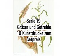 Kunstdruck I Paketpreis Serie 19 Gräser & Getreide