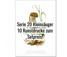 Kunstdruck I Paketpreis Serie 20 Kleinsäuger