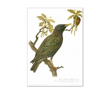 Kunstdruck I Paketpreis Serie 7 Singvögel 2