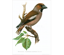 Kunstdruck I Paketpreis Serie 3 Singvögel I