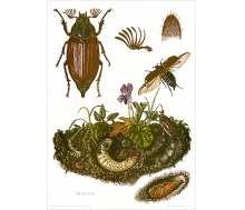 Kunstdruck I Paketpreis Serie 13 Insekten 1