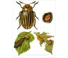 Kunstdruck I Paketpreis Serie 14 Insekten 2
