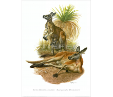 Kunstdruck I Paketpreis Serie 15 Säugetiere 2